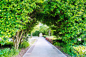 Green natural tunnel in formal garden.