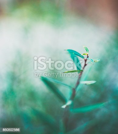 850558406 istock photo Green nature background with copy space and leaves 850502586