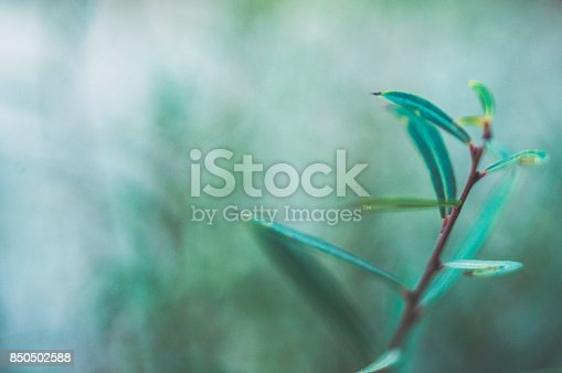 850558406 istock photo Green nature background with copy space and leaves 850502588