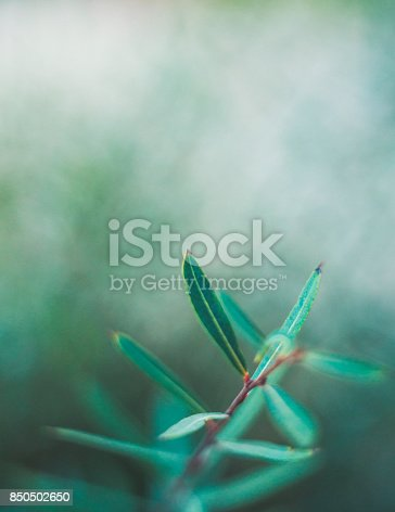 850558406 istock photo Green nature background with copy space and leaves 850502650