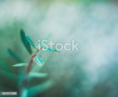 850558406 istock photo Green nature background with copy space and leaves 850502686