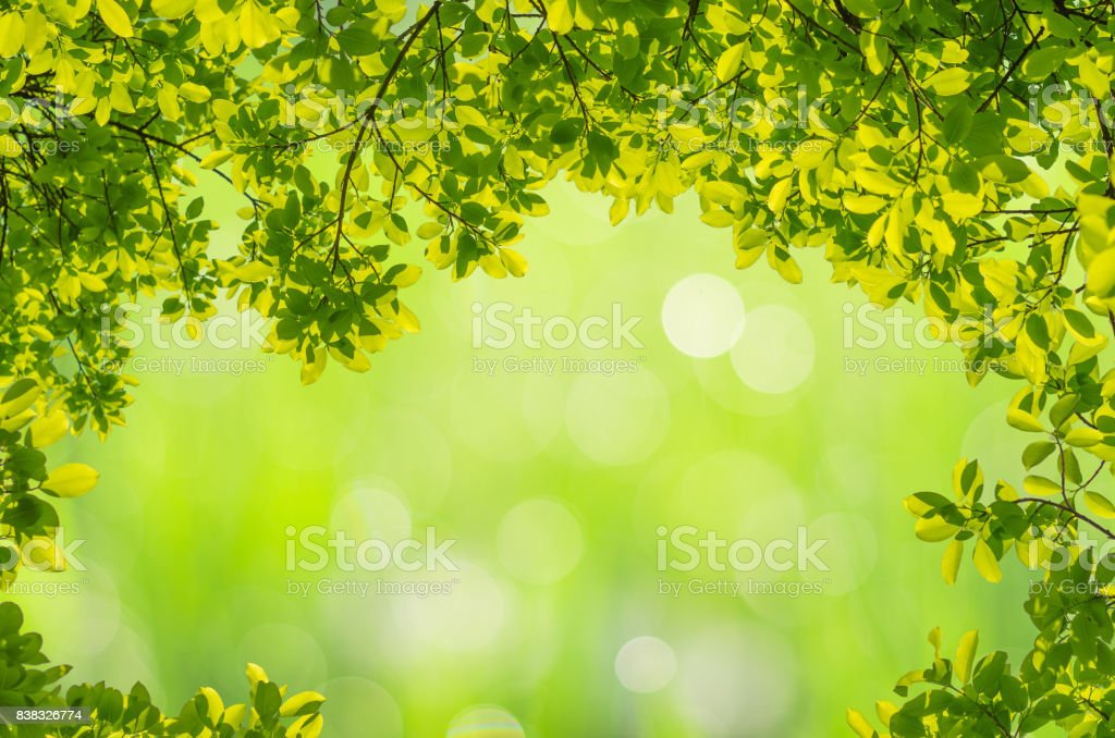 Fotografía de Fondo De Naturaleza Verde Con Hojas De Marco Y ...