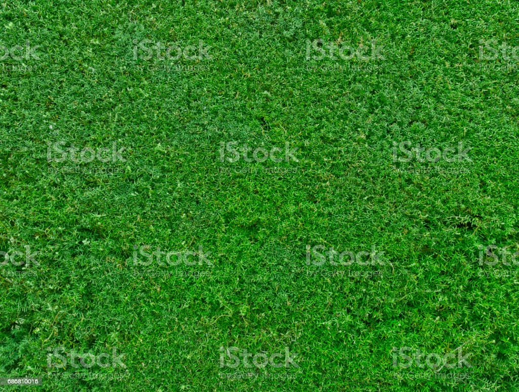 green nature garden hedge background stock photo