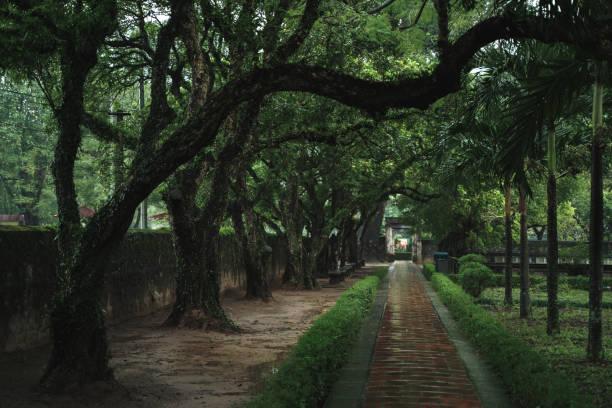 grüne naturlandschaft. hoa lu tempel in vietnam, ninh binh - holu stock-fotos und bilder
