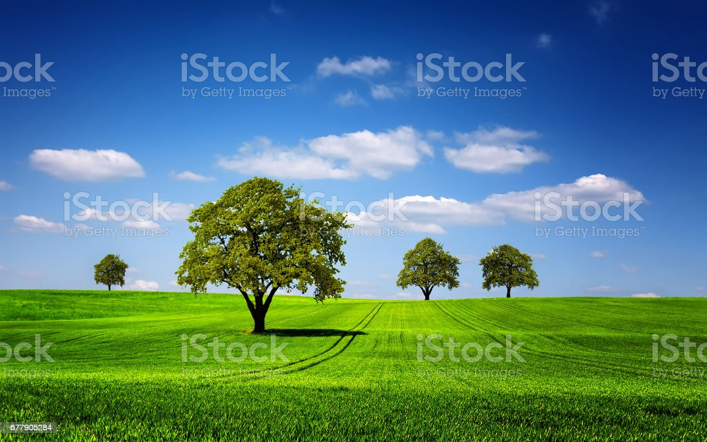 Green nature landscape royalty-free stock photo