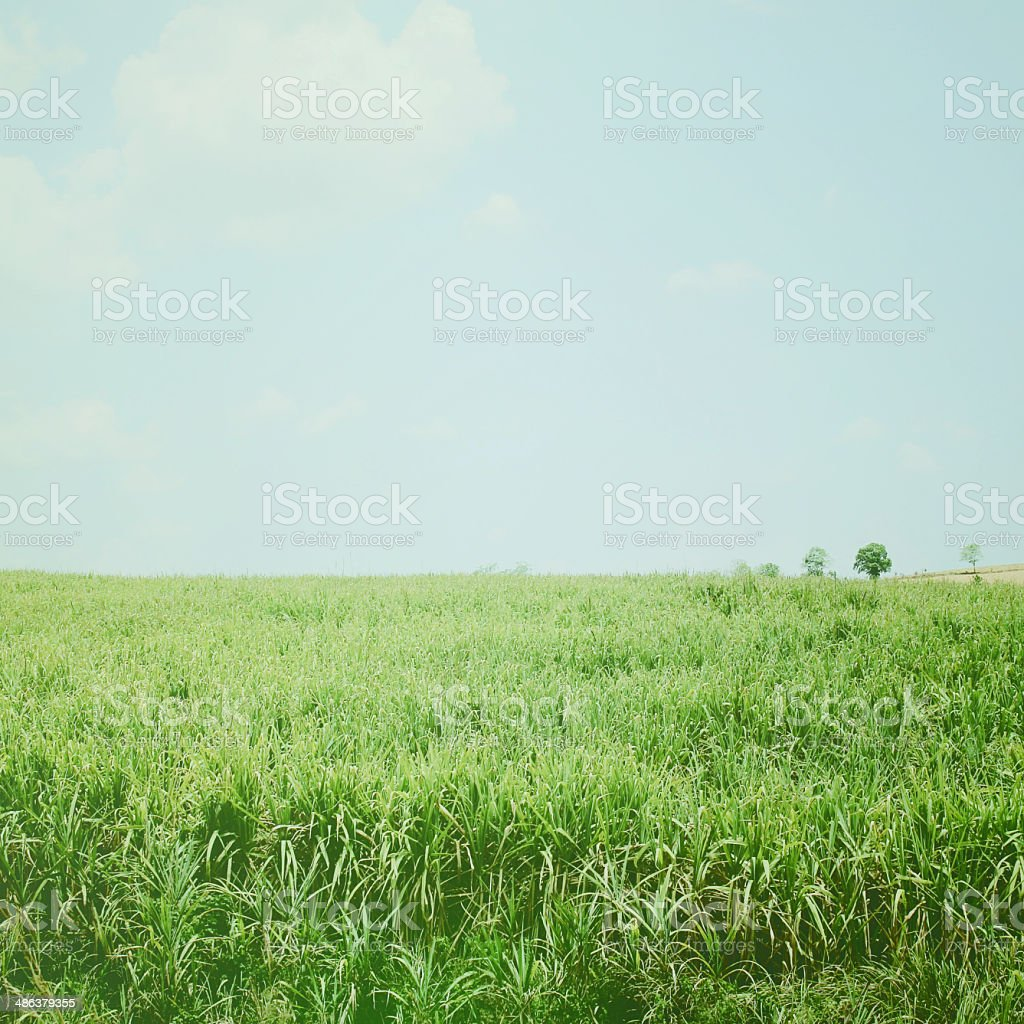 Green nature landscape with retro filter effect stock photo