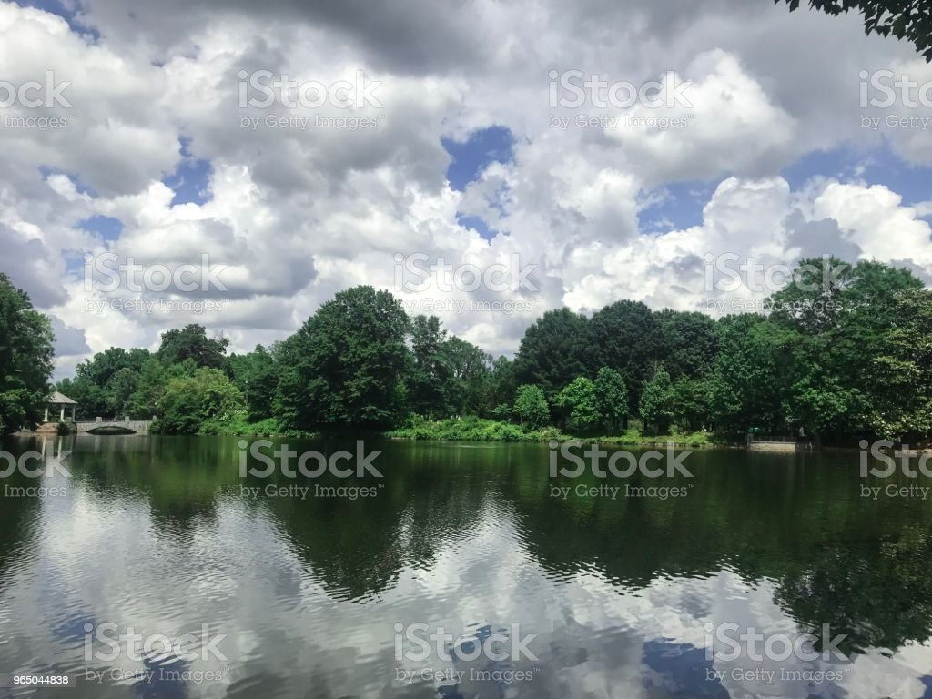 Green nature near the lake royalty-free stock photo