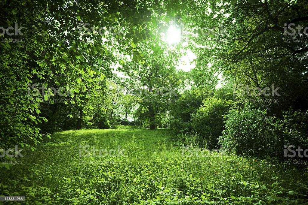 Green Nature royalty-free stock photo