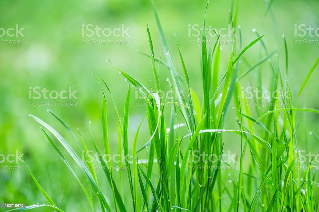 Green nature royalty-free stock photo