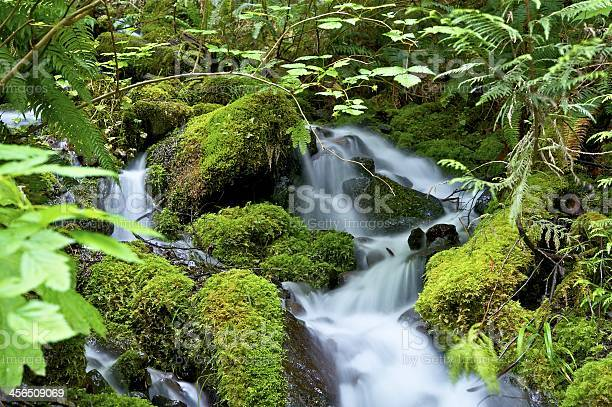 Photo of Green Nature