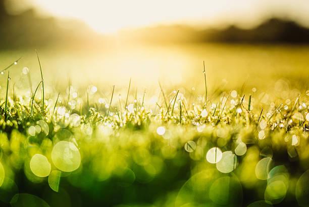 Green naturaleza - foto de stock