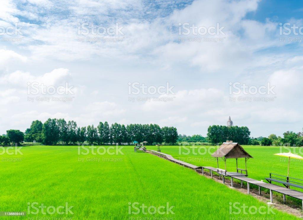 Campo De Arroz En Terrazas Verde Naturaleza Con Pasarela De