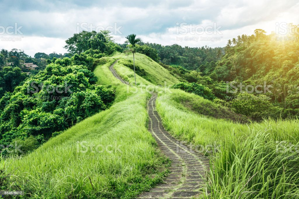 Green nature Trail in Ubud, Bali, Indonesia stock photo