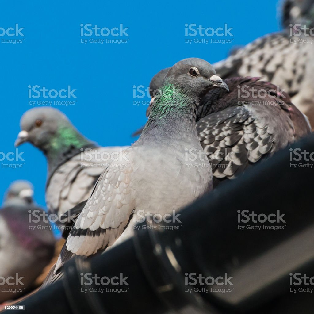 Green Neck stock photo
