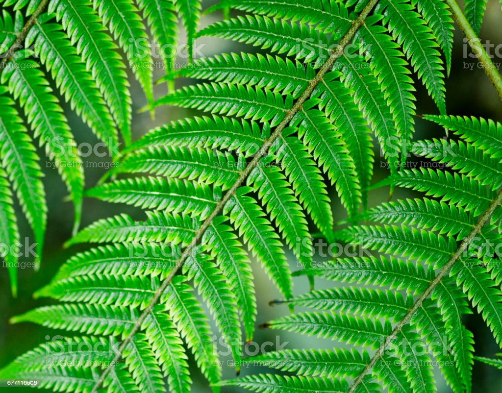 green New Zealand ferns stock photo