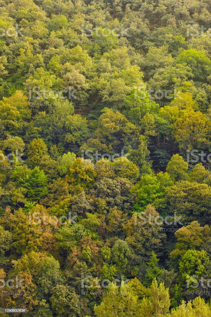 Verde floresta de carvalhos na biosfera Muniellos reserva, Astúrias. Espanha - foto de acervo
