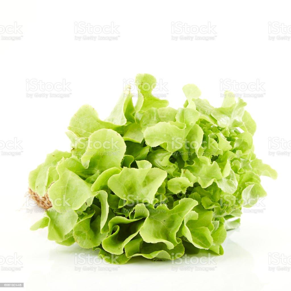 Green oak leaf lettuce stock photo