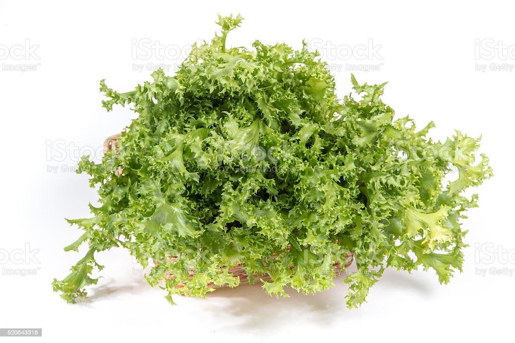 Green oak lettuce on white background stock photo