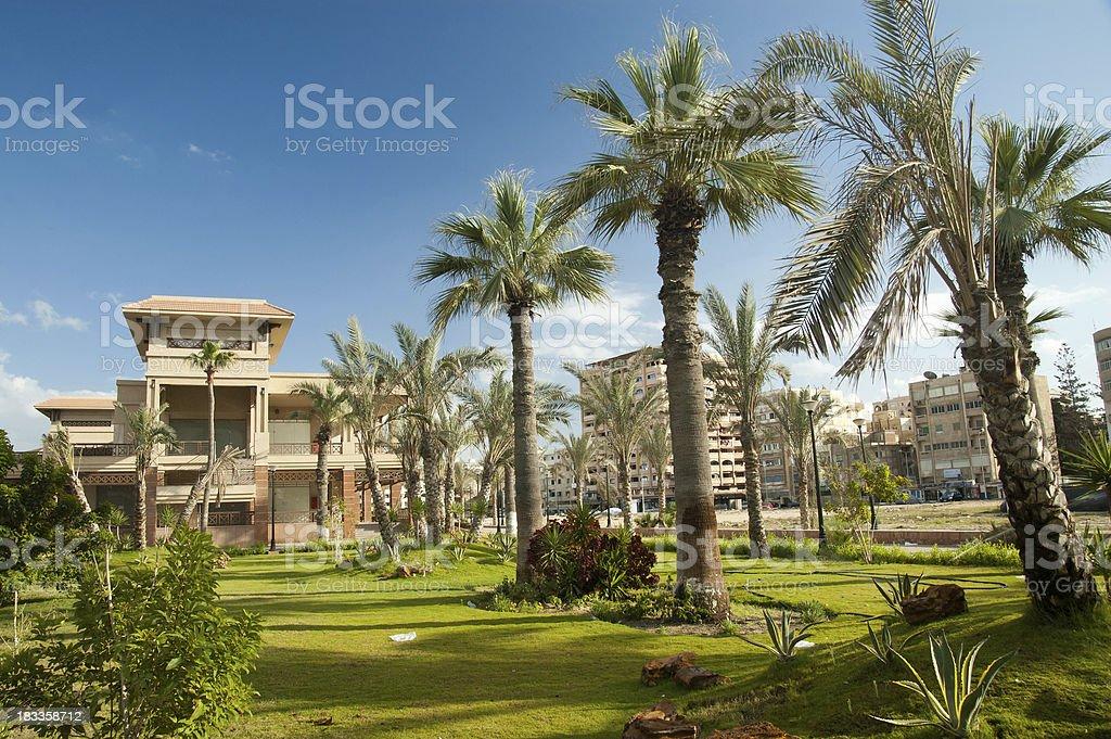Green oasis stock photo