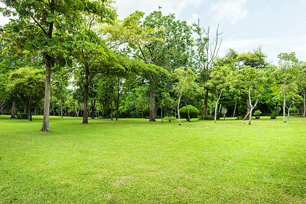 Green of Garden Landscape With Cloudy sky stock photo