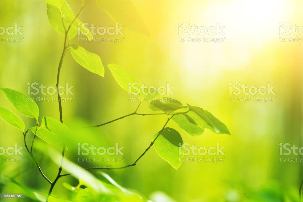 綠色的樹葉 免版稅 stock photo