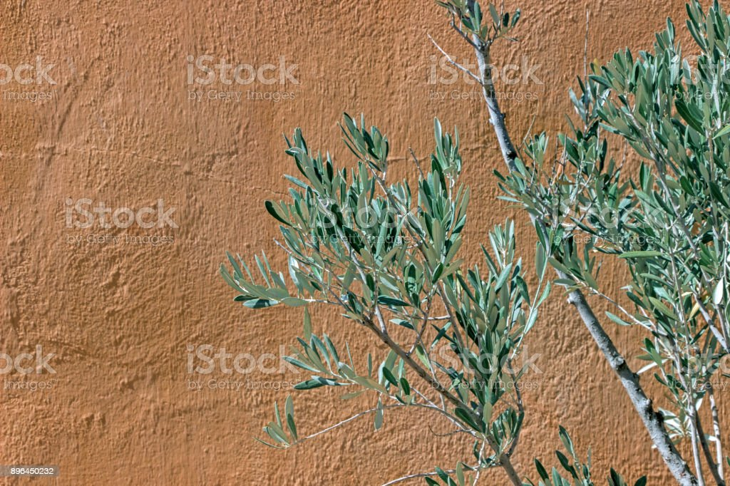 branche d'olive verte avec mur orange - Photo