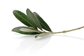 Green olive leaves isolated on white background
