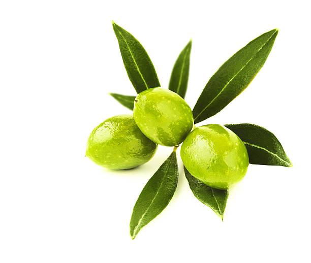 fresco verde olive branch - ramoscello d'ulivo foto e immagini stock