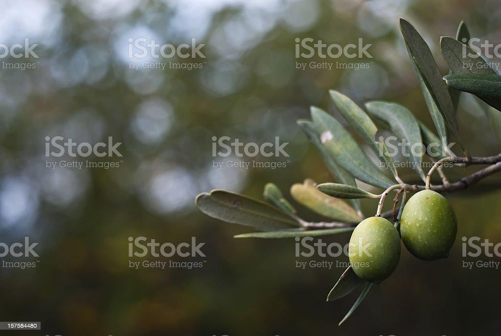Olive verdi - foto stock