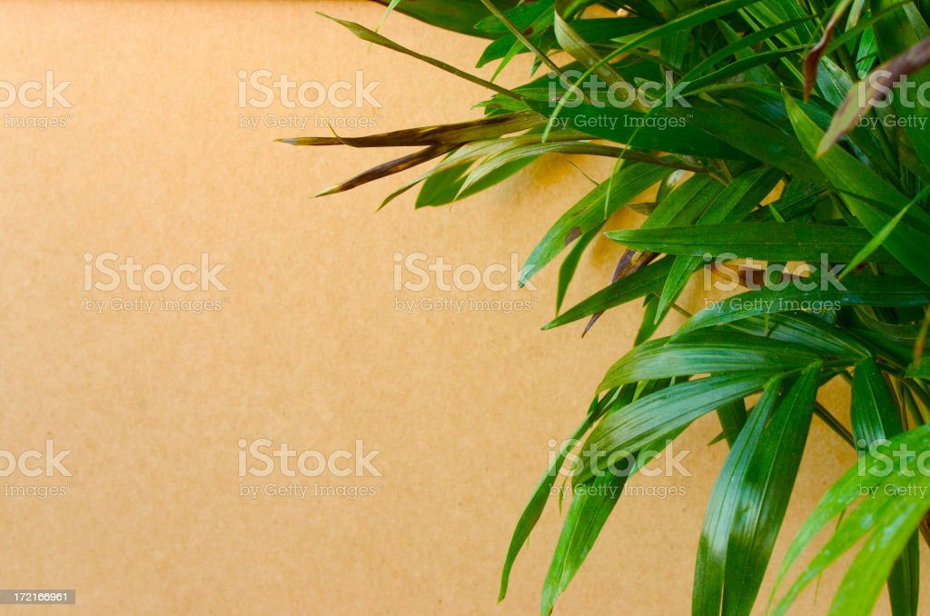 Green on brown royalty-free stock photo
