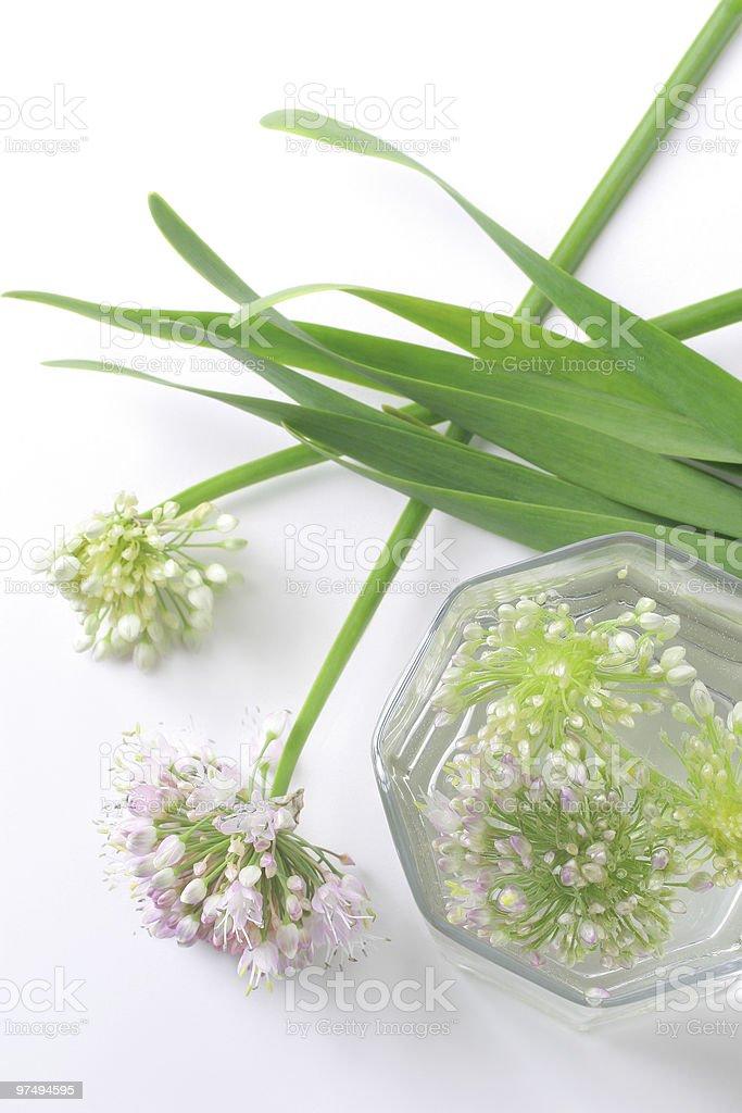 Green onion flowers royalty-free stock photo