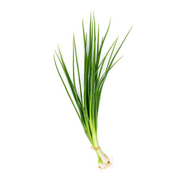 groene ui geïsoleerd op witte achtergrond - bosui stockfoto's en -beelden