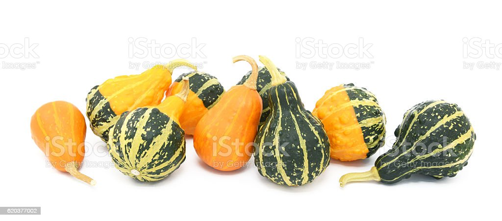 Green, orange and yellow ornamental gourds foto de stock royalty-free