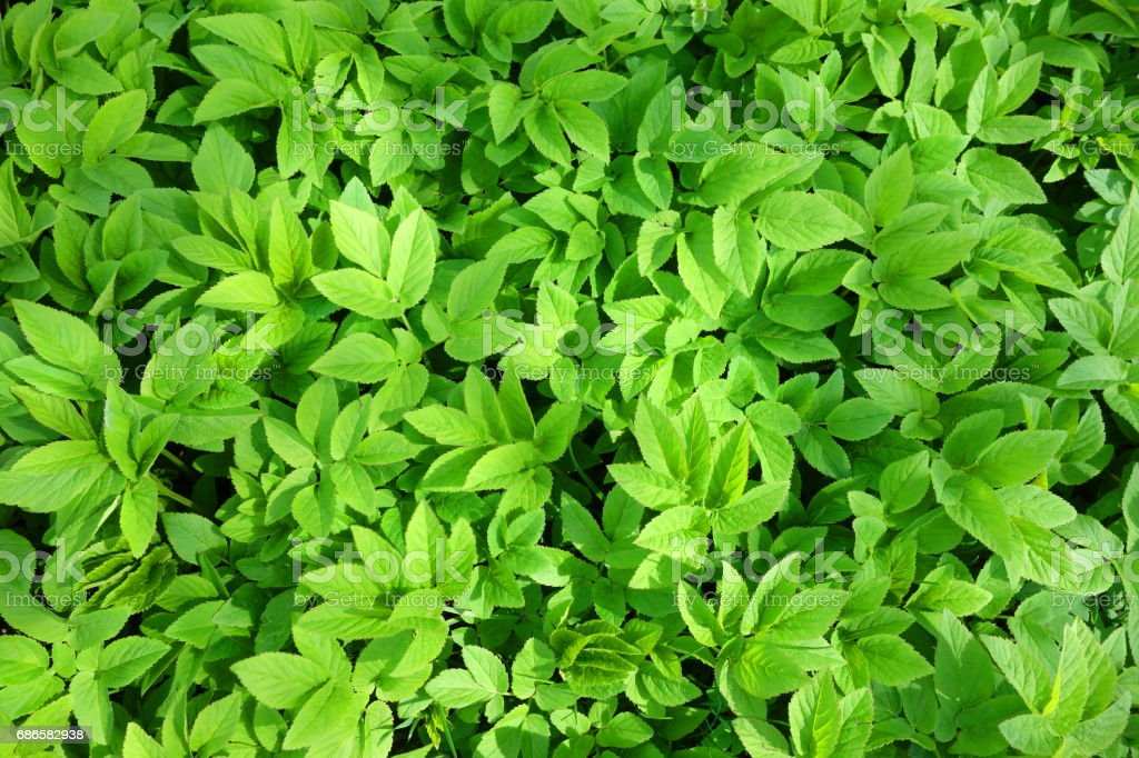 Green organic background royalty-free stock photo