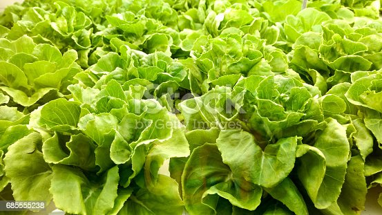 685555238 istock photo Green organic vegetable. 685555238