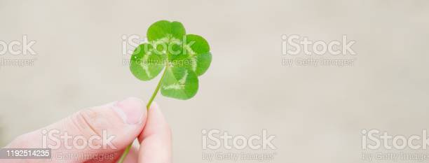 Green our leaf clover in a mans hand picture id1192514235?b=1&k=6&m=1192514235&s=612x612&h=pzldxnjpw8jl7eawjhe7ck6nytgn22wn947uztyjot8=