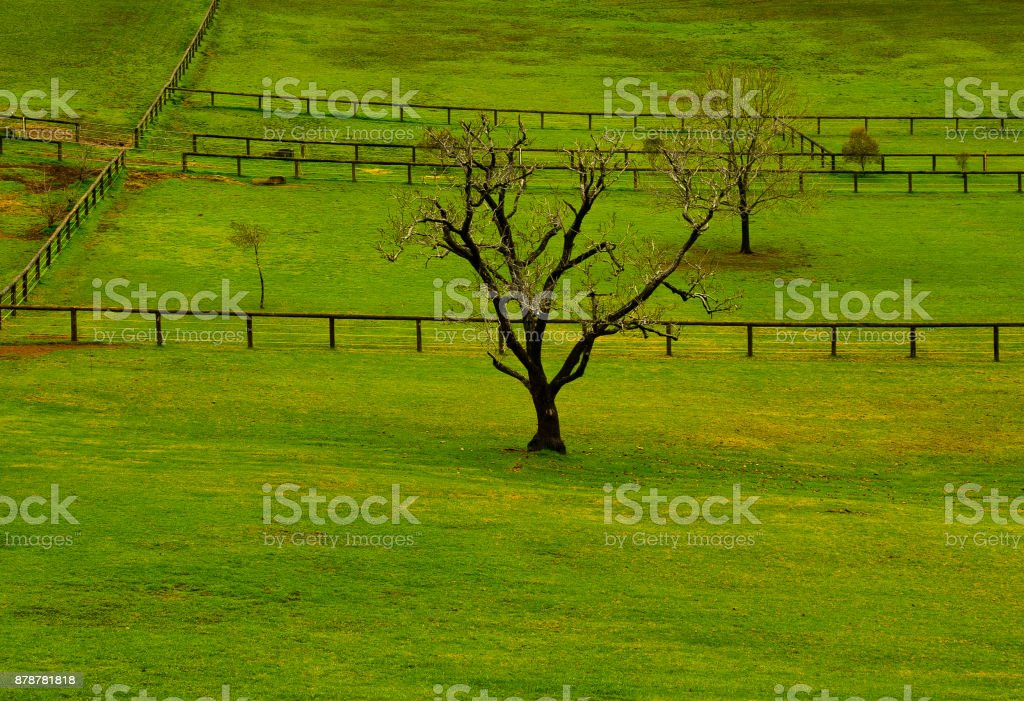 green paddock with lines of fencing stock photo