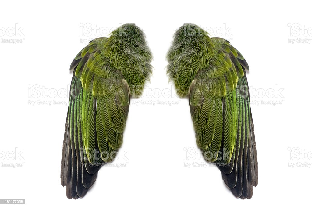 Green pair of folded bird wings stock photo