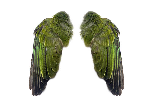 Tutorial: bird-wing by Larua on DeviantArt  Folded Bird Wings