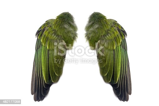 Green Pair Of Folded Bird Wings Stock Photo & More ...