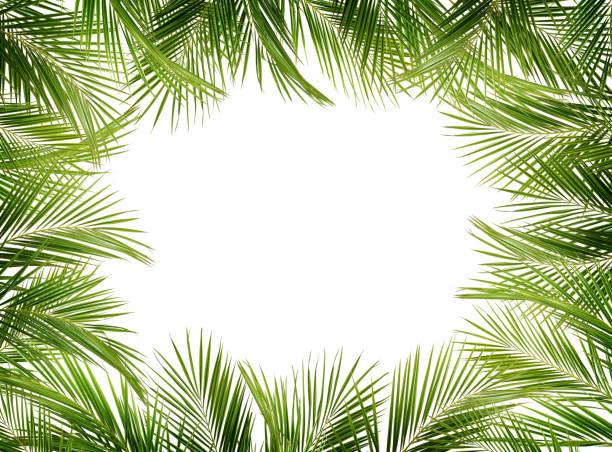 fond de branches de palmier vert - motif tropical photos et images de collection