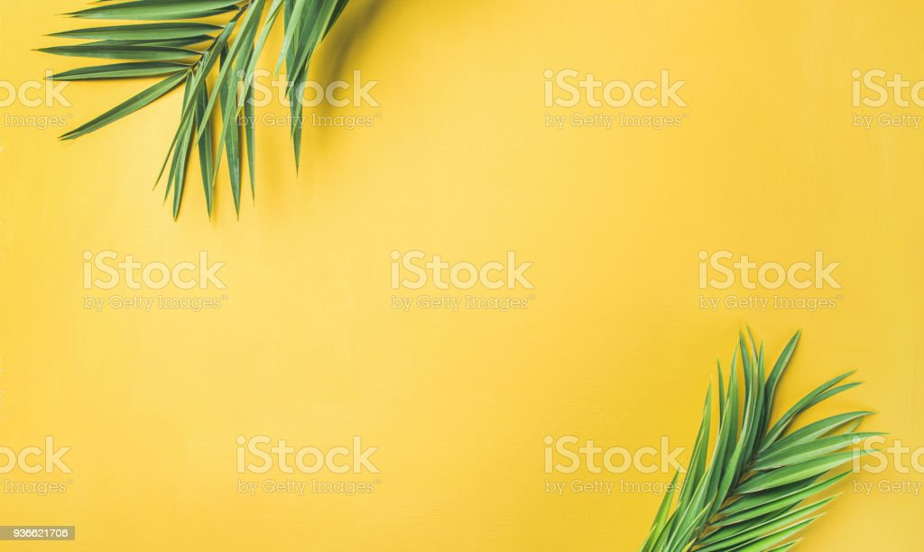 Green palm branches over yellow background, wide composition stock photo