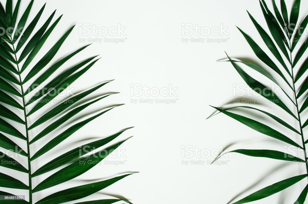 Green palm leaf branches on white background royalty-free stock photo