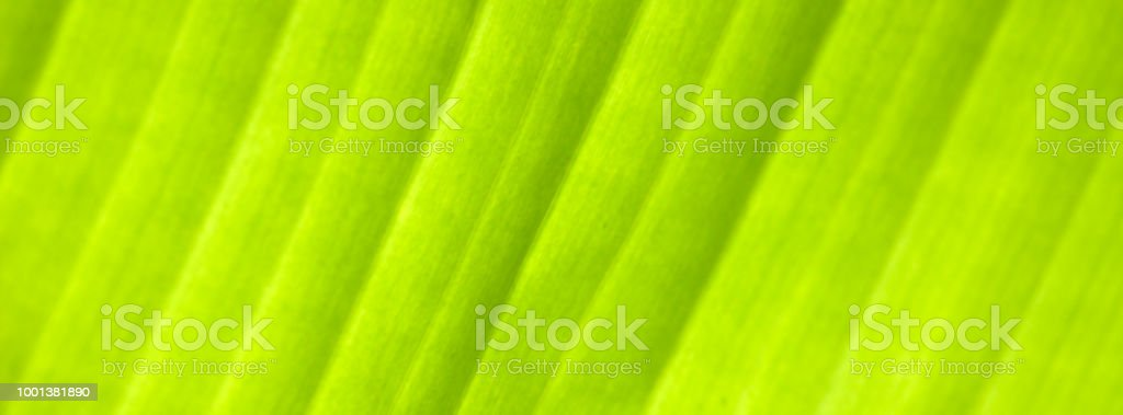 Green palm leaf, close-up. Blurry unfocused photographic effect. Web...