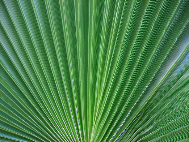 Green Palm Leaf – Foto