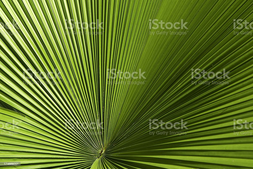 Green palm leaf vein background royalty-free stock photo