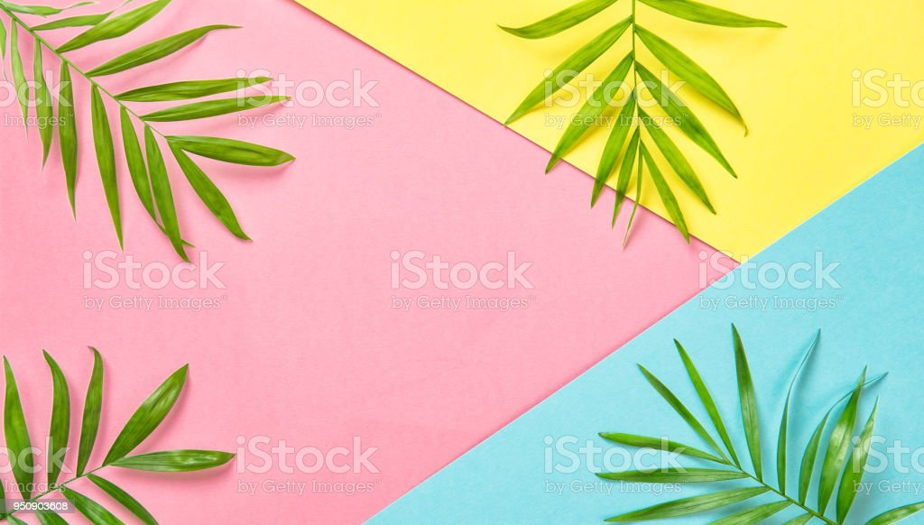 Green palm leaves on colorful background. Floral flat lay. Holidays...