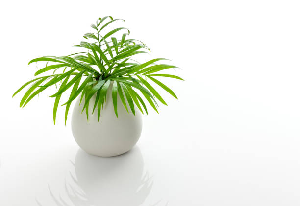 Green palm leaves in a white ceramic vase stock photo