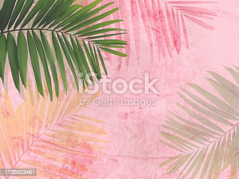 Close up green palm leaves over pink painted grunge concrete wall.