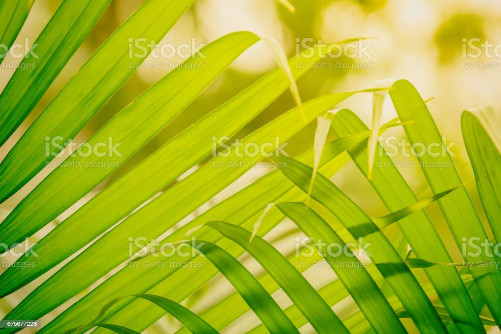 green palm leaves royalty-free stock photo